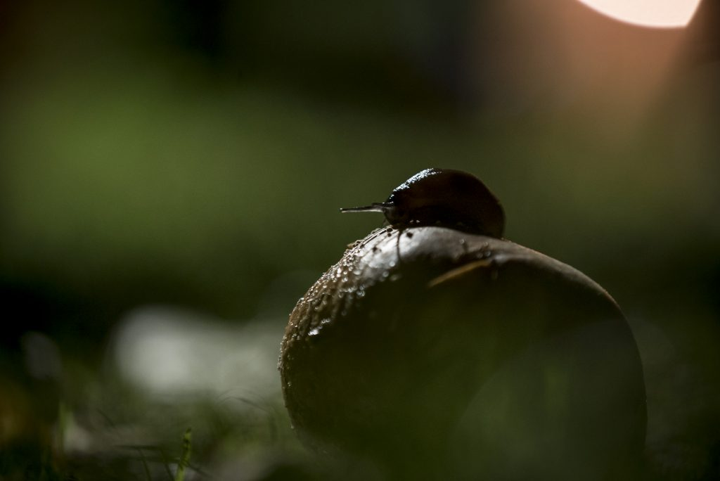 Slug in the Flowers' garden