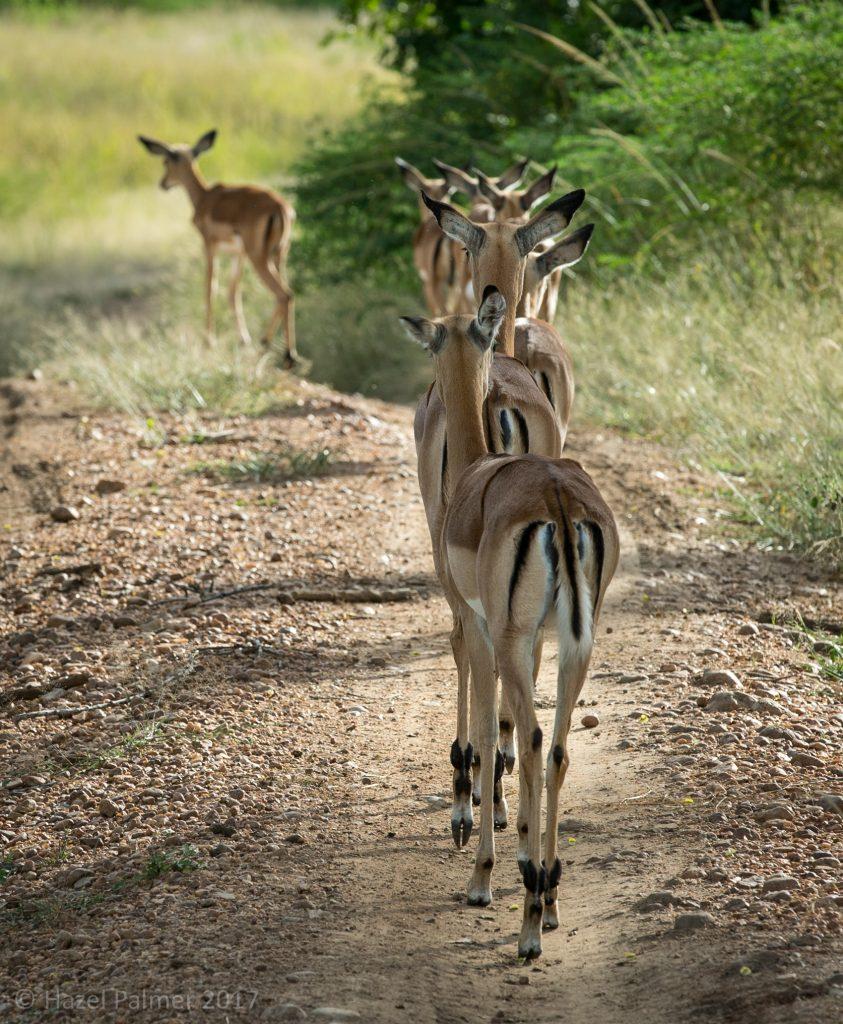 Impala queueing