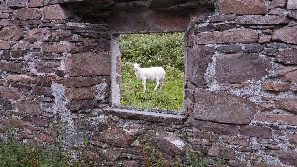 Half a Sheep