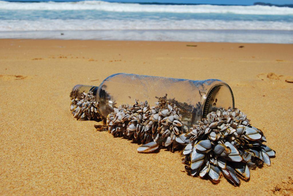 Molluscs on Bottle